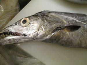 太刀魚の味醂干しで~