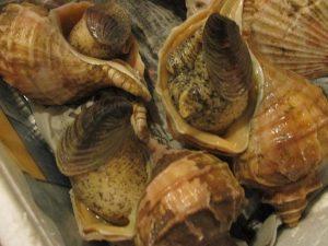 北海道のツブ貝の刺身で~