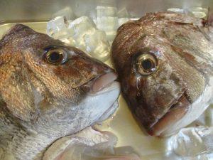 房総の鯛、頭も骨も食べようか~