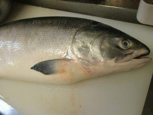 六月は「時しらず」という美味しい鮭で~♪