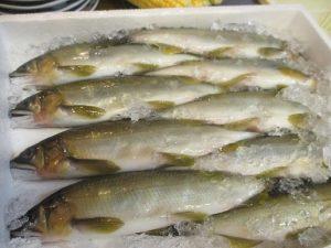 香魚と呼ばれる「鮎」という魚です~
